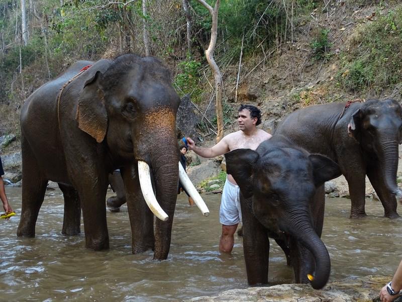 Spalare De Elefanti