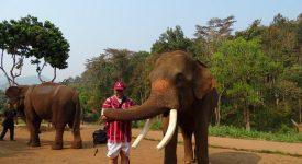 Patara Cu Elefant