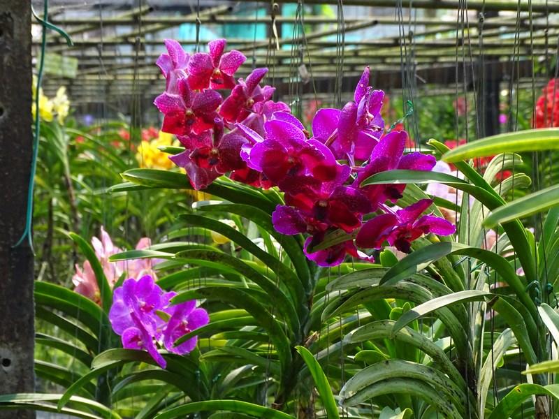 Orhidee Chiang Mai