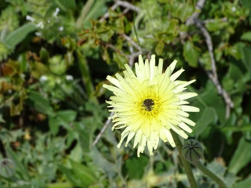 Floare Castellon