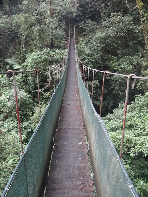 Poduri Costa Rica