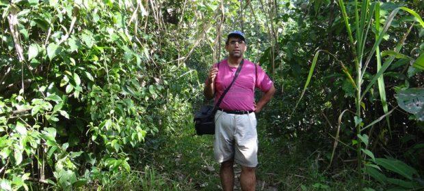 Jungla Costa Rica