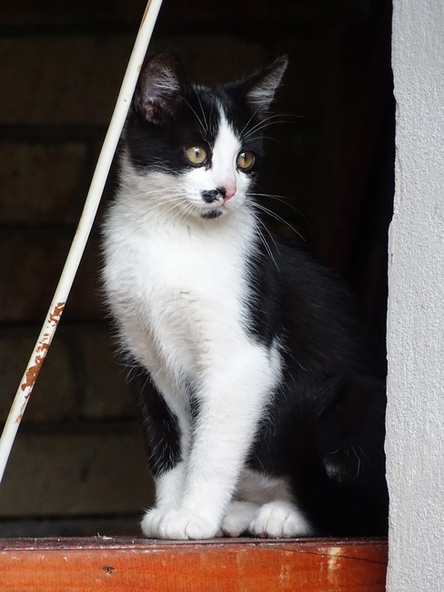 Cats Of Brasov