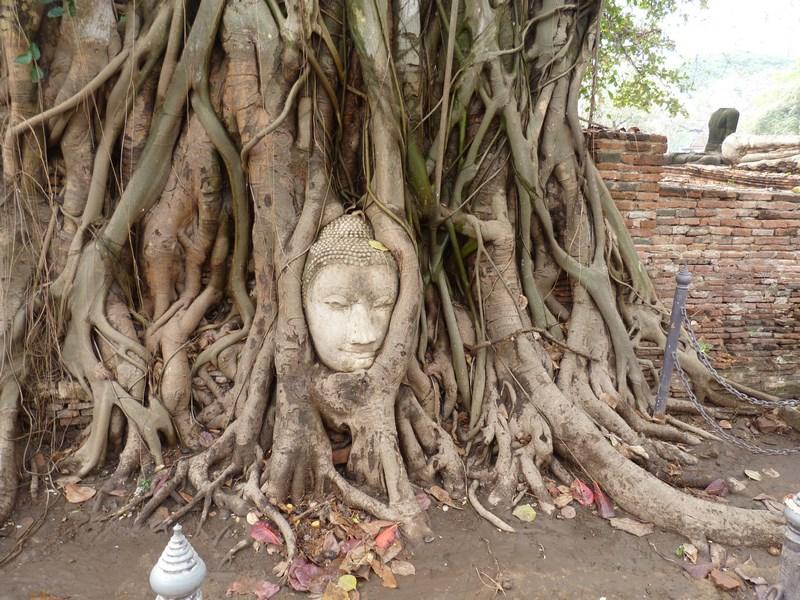 Capul Lui Buddha