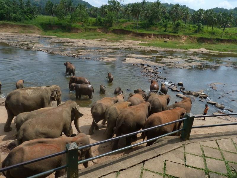 Orfelinat Elefanti Pinnewala