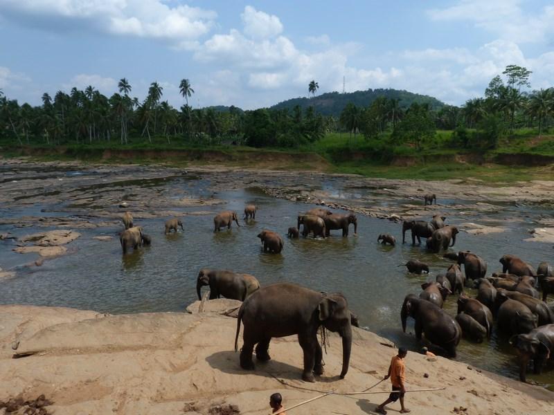 Elefanti Pinnewala