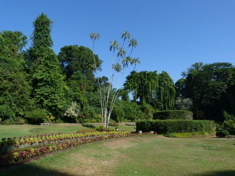 Gradina Botanica Peradinyia
