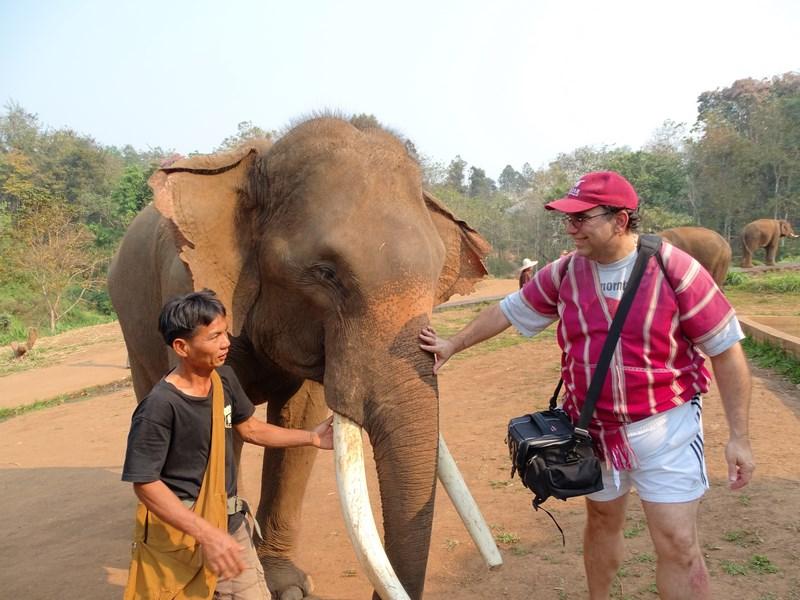 Ferma Elefanti Chiang Mai