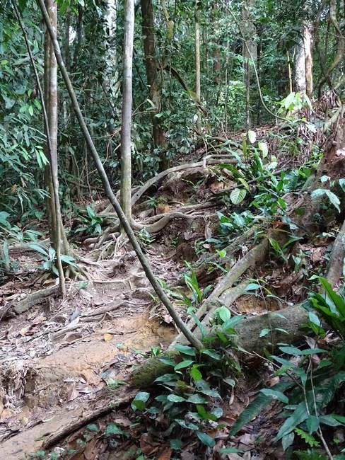 Jungla Sumatra