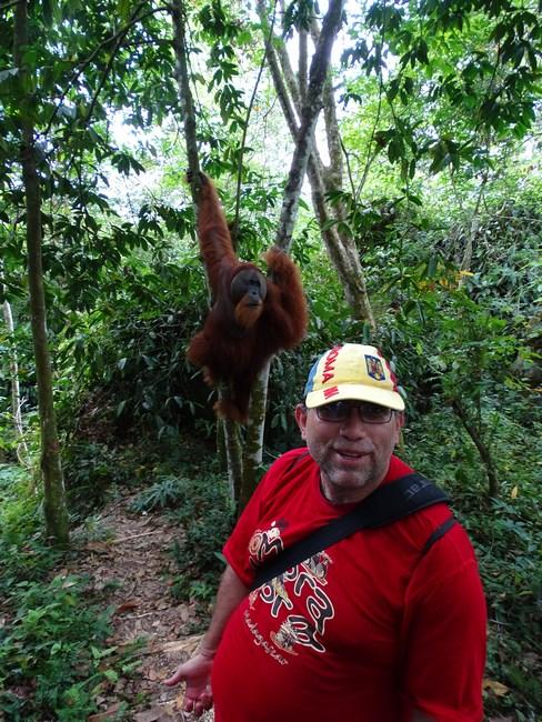 Langa Un Orangutan