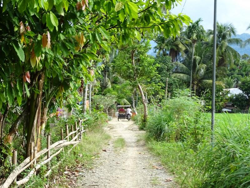 Drumuri De Tara