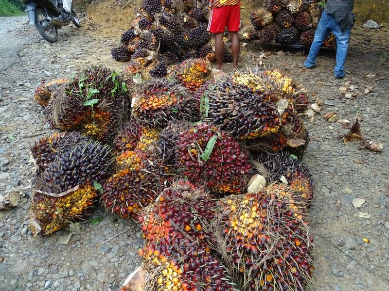 Fruct Palmier De Ulei