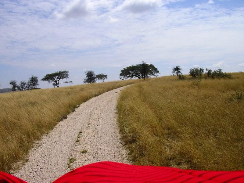 Sosea Serengeti