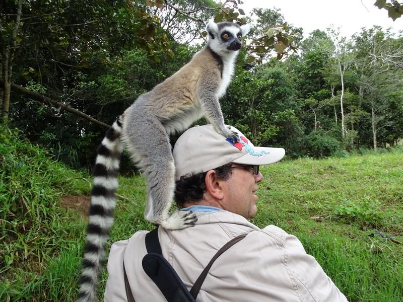 Lemur Andasibe
