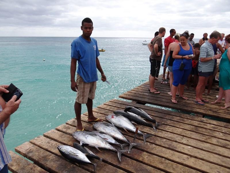 Pescar Ton