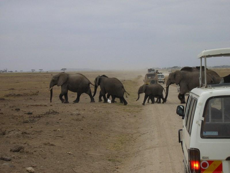 Elefanti In Amboseli