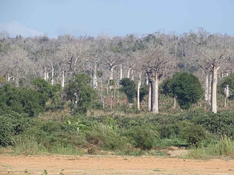 Padure Madagascar