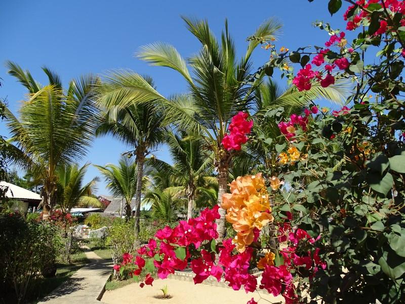 Flori Madagascar