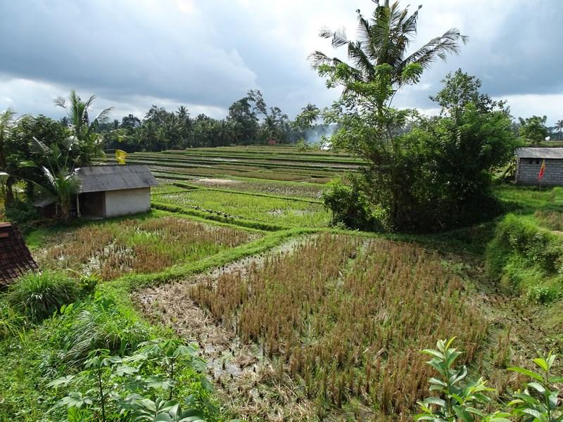 Panorama Ubud