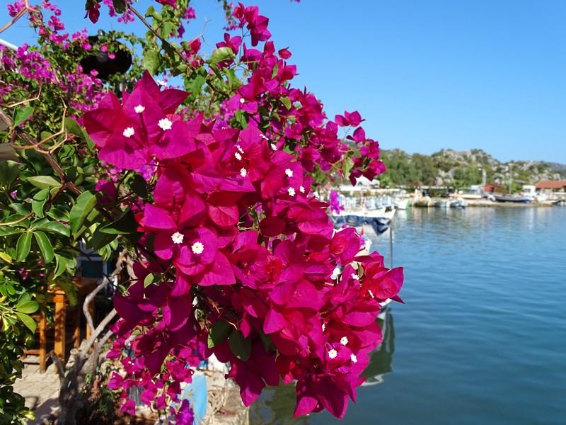 Flori Antalya