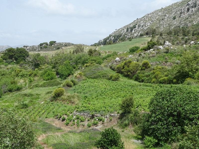 . Muntii Cretei