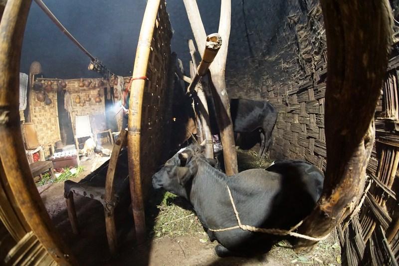 Vaca In Casa