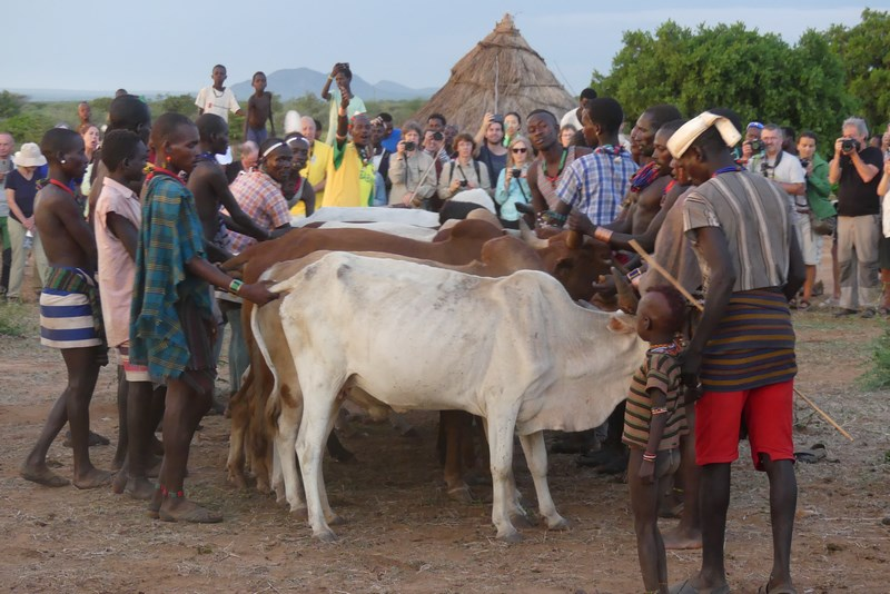 Vacile Pregatite