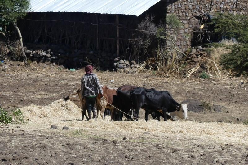 Agricultura In Etiopia