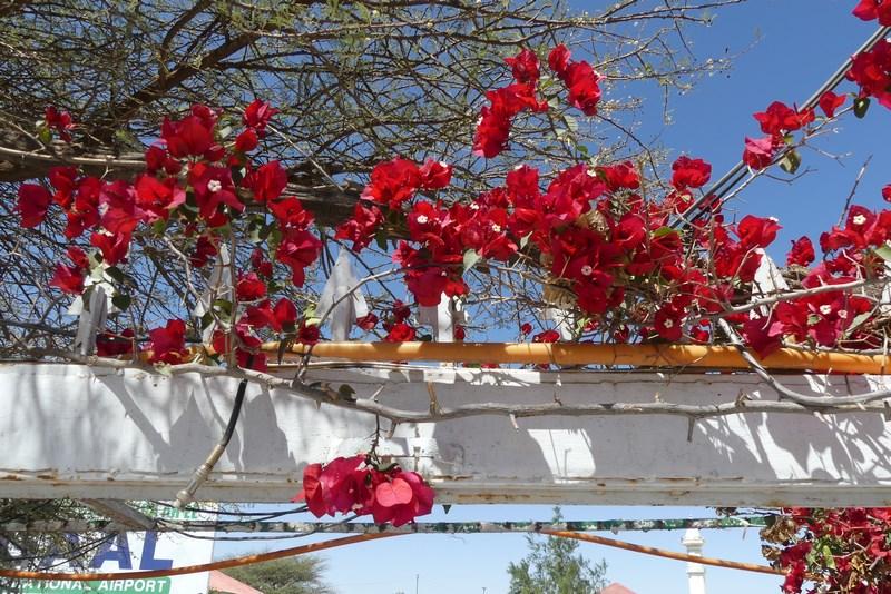 Flori in Somaliland
