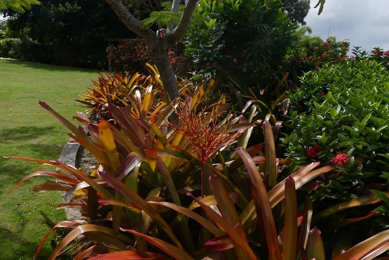 Botanica Nevis
