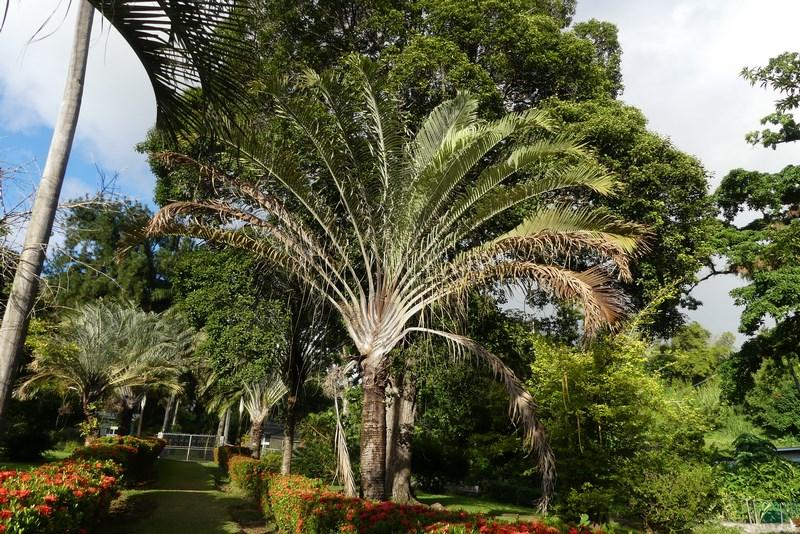 St. Vincent Botanical Garden