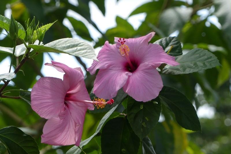 Flori Trinidad