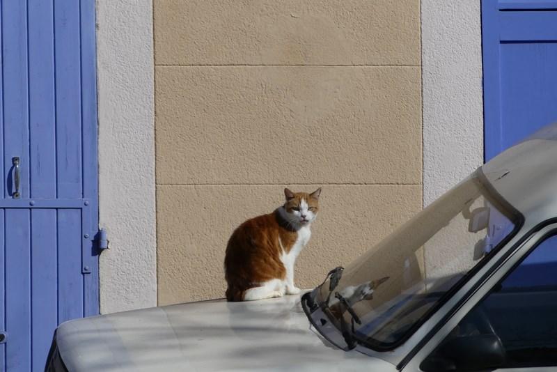 Pisica Le Panier