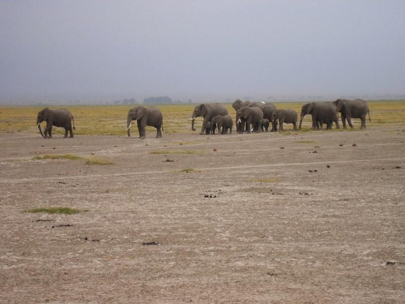 Turma elefanti