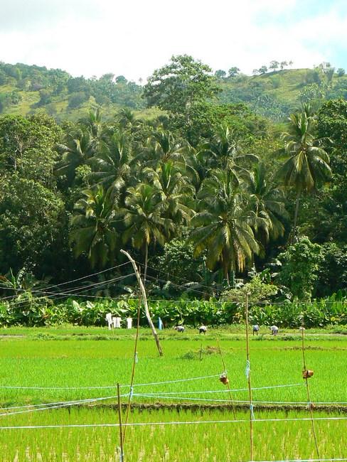 Orezarie Bohol
