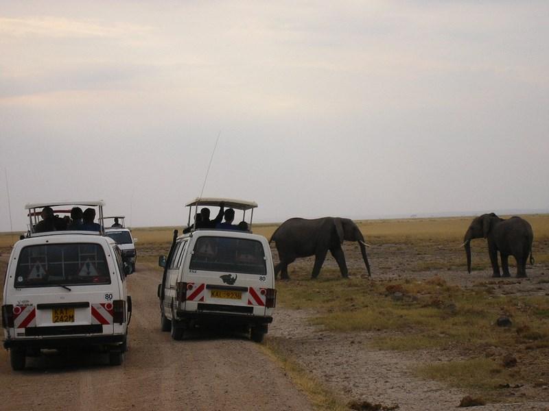 Traversare elefanti