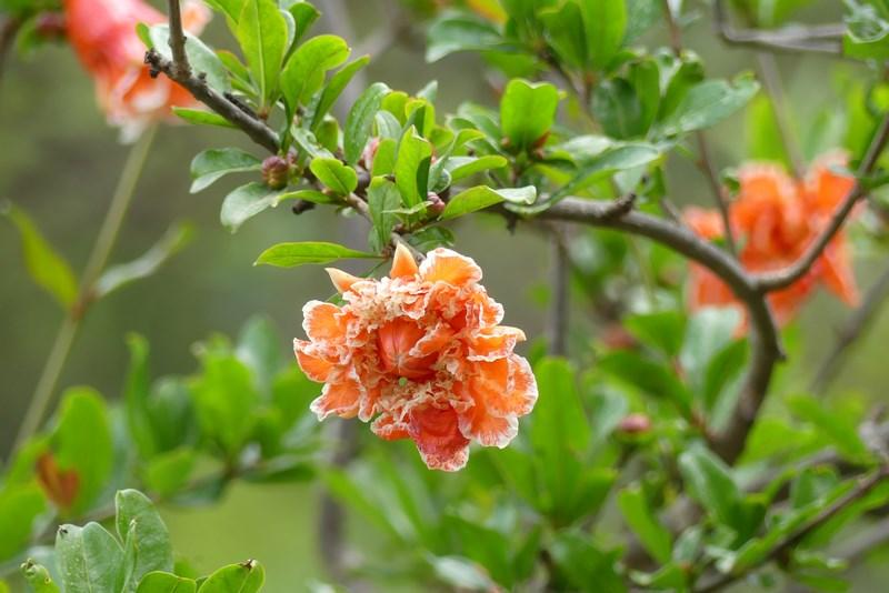 Flori Gradina Botanica