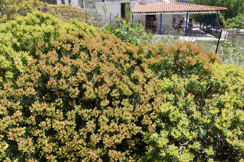 Flori Creta
