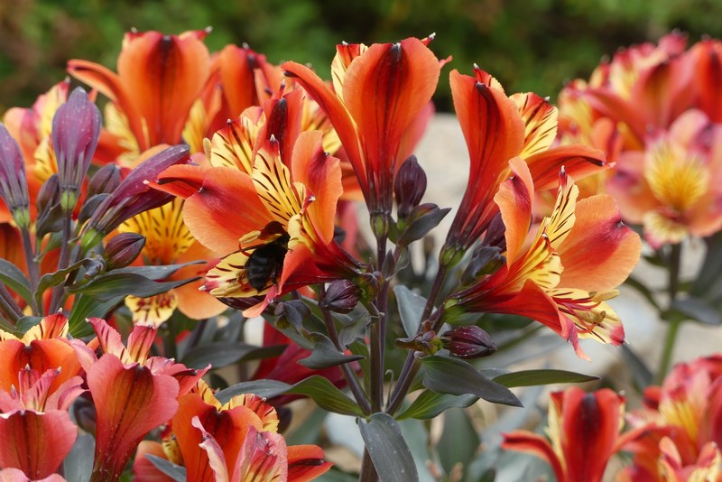 Flori gradina botanica Creta