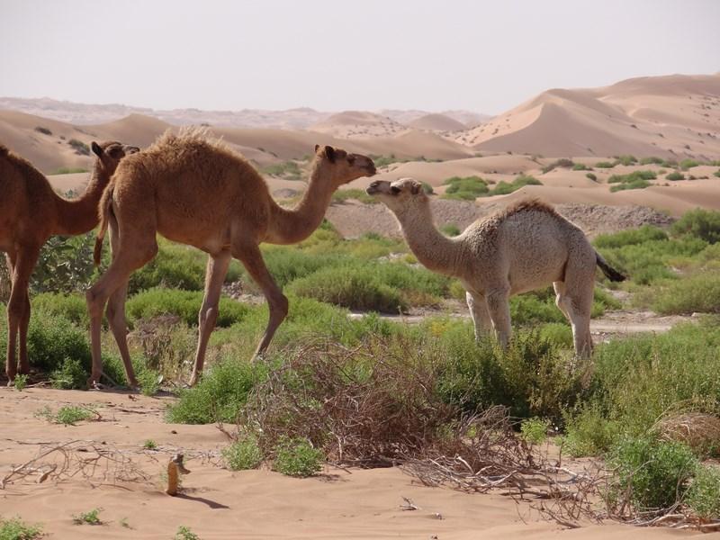 Camile Oman