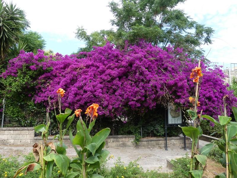 Flori Rhodos