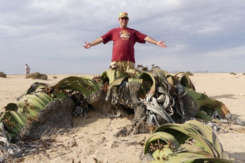 . Welwitschia Mirabilis Namibia
