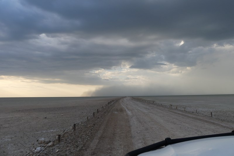 Furtuna in Etosha
