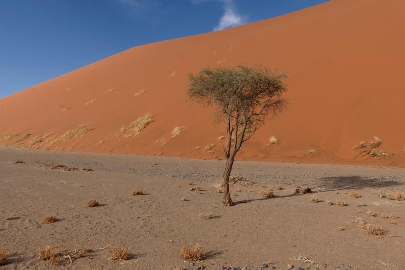 Vegetatie in desert