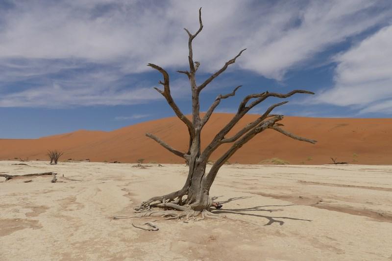 Copac mort