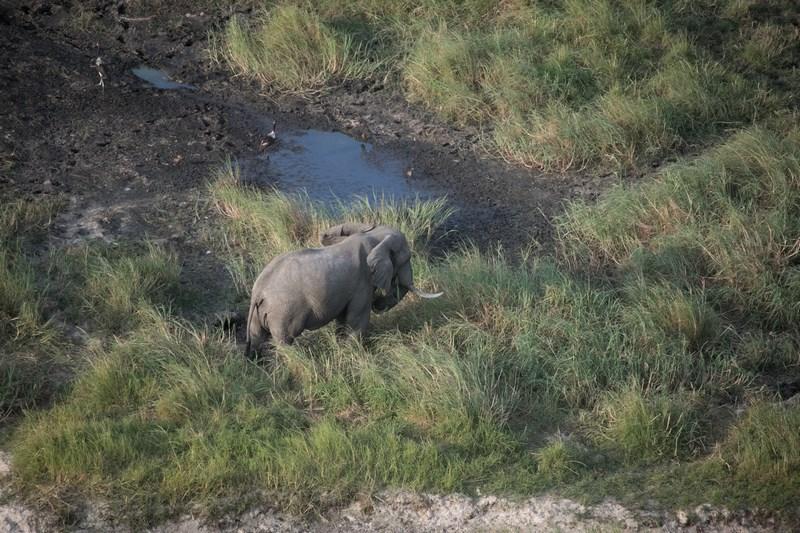Elefant solitar