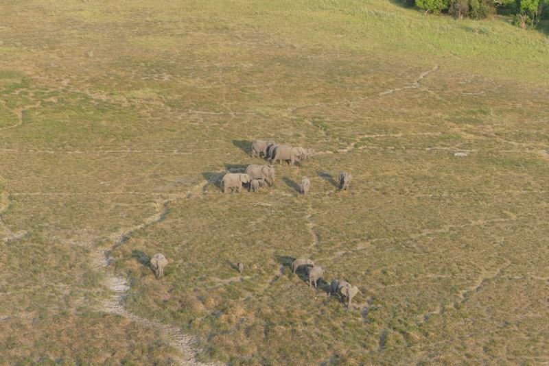 Elefanti Botswana