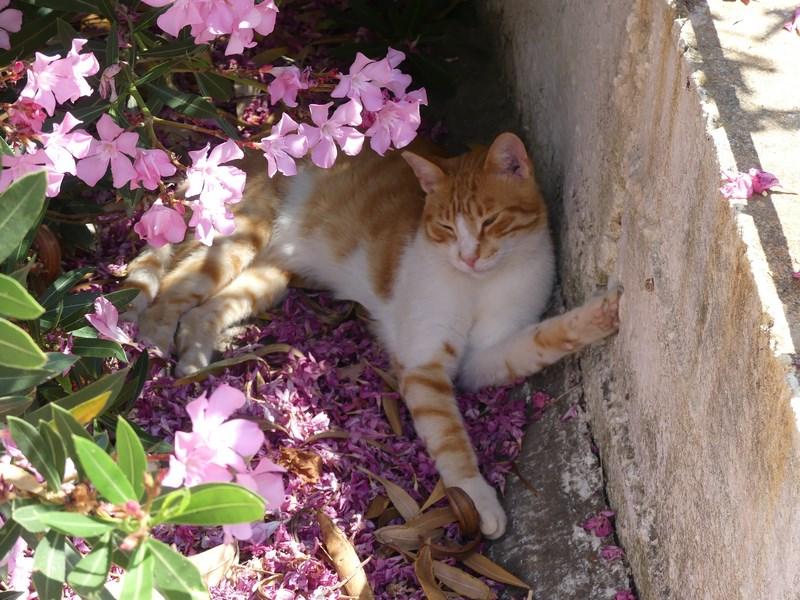 Pisica in flori