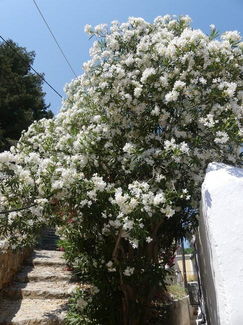 Strada cu flori