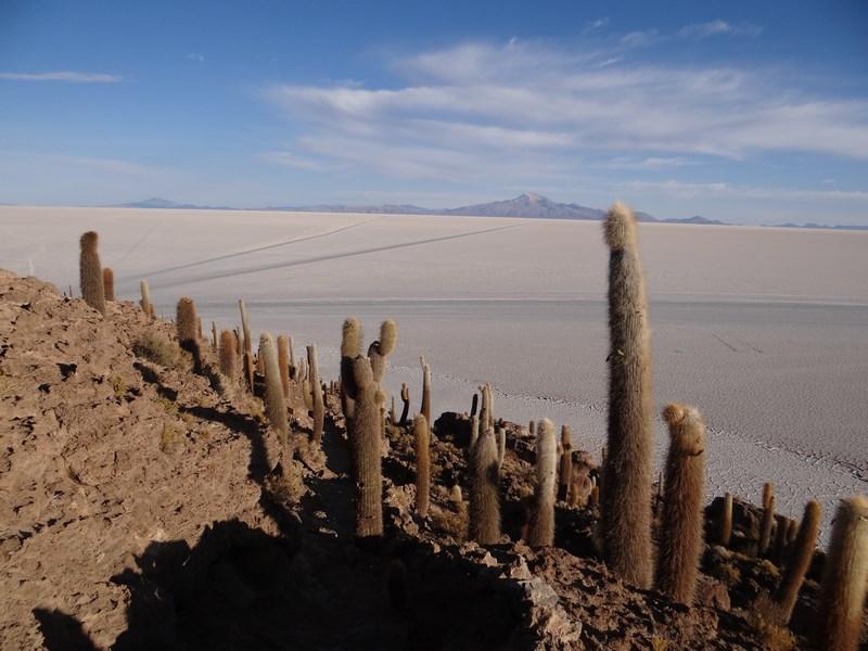 Insula cu cactusi